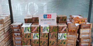 SAG Arica y Parinacota detecta Mosca de la Fruta en productos agrícolas ingresados clandestinamente