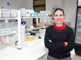 Buscan controlar estafilococos resistente a antibióticos en la cadena productiva avícola con antimicrobianos naturales