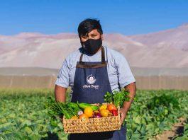 Cooperativa Norte Verde: Nueve jóvenes le agregan innovación a la pequeña agricultura de Arica