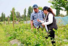 Expo chile agrícola: INDAP cierra su participación revisando los ejes estratégicos del prodesal y la politíca nacional de desarrollo rural