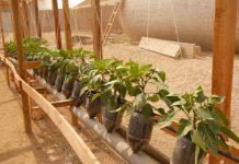 FIA abre desafío tecnológico para evitar enfermedades virales en hortalizas en la región de Arica y Parinacota