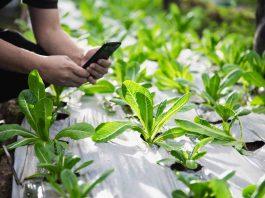 FIA destinará $4 mil millones para apoyar las mejores soluciones y proyectos de innovación en el agro