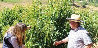 INDAP presenta nuevo seguro agrícola para Nogales: Hasta 95% de subsidio estatal en su contratación