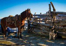 Influenza Equina: SAG recuerda resolución de vacuna obligatoria para equinos.