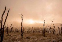 """Investigadores U. de Chile alertan sobreDominga y cambio climático: """"Tiene impacto contundente sobre el entorno"""""""