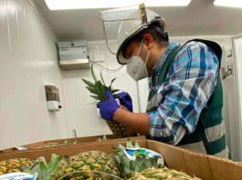 Principalmente hortalizas y frutas: SAG destaca aumento de las importaciones a través de los puertos de Biobío