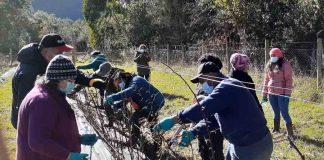 Agricultoras de Futrono se capacitan en poda de formación en las principales especies de berries