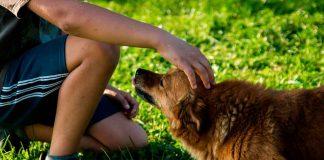 Consejos para manejar el estrés o ansiedad de sus mascotas