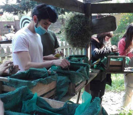 Estudiantes de agronomía UdeC participarán del programa de huertas urbanas en Chiguayante