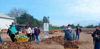 Extensionistas de INIA la platina realizaron día de Campo en Melipilla para impulsar alternativas sustentables al uso del fuego en tareas agrícolas