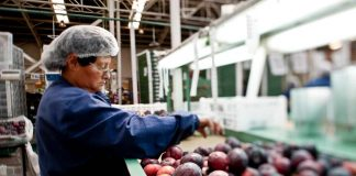 FIA abre convocatoria de innovación en Ñuble por $150 millones