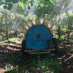 Polinización asistida en plantaciones