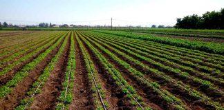 Pequeños productores y comunidades Agrícolas afectadas por la sequía disponen de $3 mil millones para repostular sus proyectos de riego