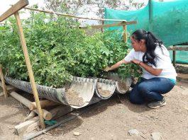 Positivo balance de Expo Chile Agrícola 2021: Mujeres duplican a los hombres en interés por capacitarse