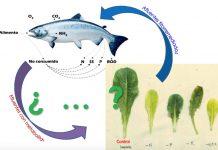 Proyecto impulsa establecer red productiva biointegrada para el sector agrícola y acuícola