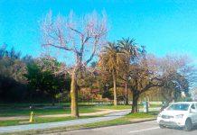 SAG Biobío capacitó a representantes de municipios sobre reconocimiento de plagas cuarentenarias en el arbolado urbano