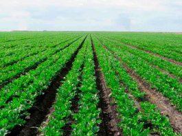 SAG Biobío se reunió con productores de semilla de exportación