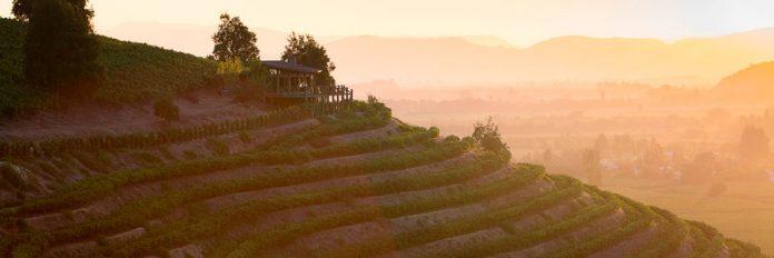 Viñedo la roblería de Ventisquero: Esta primavera trae sunsets con música en vivo y recorridos 4x4 por las alturas del valle de Apalta