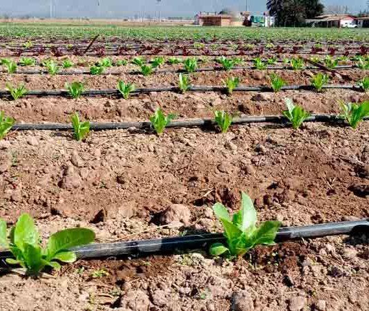 CNR invita a pequeños agricultores a presentar sus proyectos de obras civiles y tecnificación a nuevo concurso por $1.300 millones