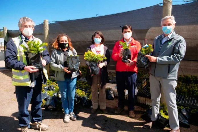 INFOR apuesta por la conservación de la araucaria con proyecto de migración asistida desde Biobío