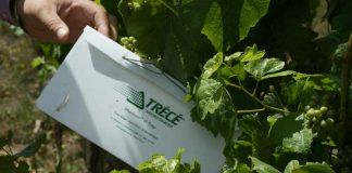 SAG Los Lagos inicia instalación de trampas para monitorear presencia de plagas en frutales